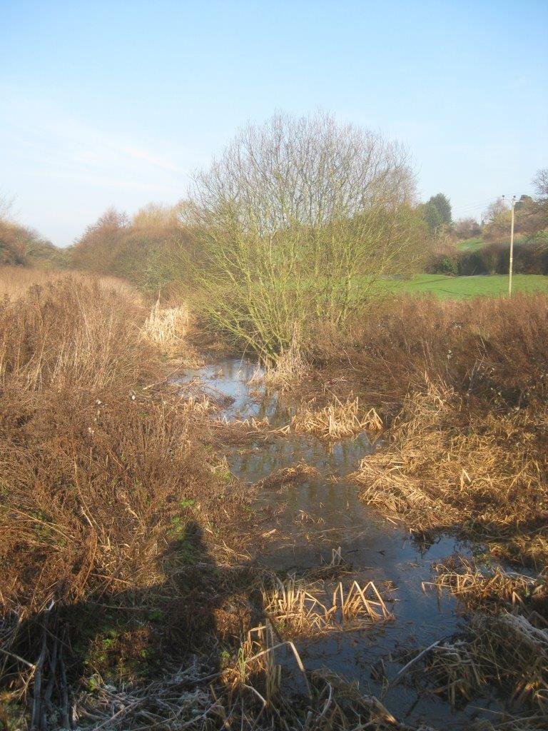 Binsted's chalk stream Rife valley is habitat for Great Crested Newt, Snipe and many other marshland creatures