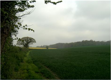 Binsted has important hedgerow wildlife corridors which would be destroyed by Arundel Bypass Option B