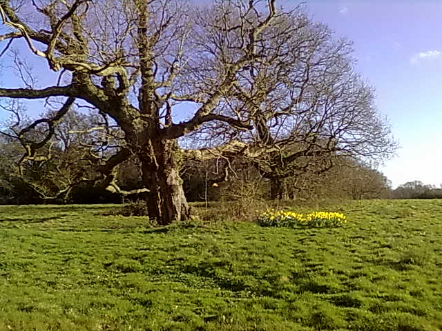 Binsted's venerable oaks stand against destruction by any A27 Arundel Bypass